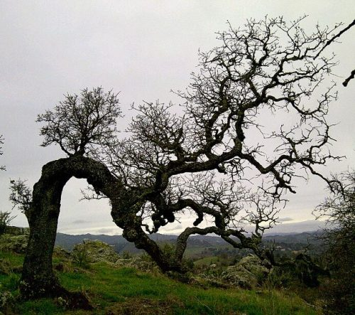 grieving tree